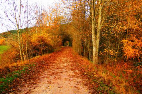 Ich liebe den Herbst!