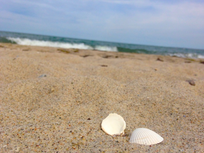 Muscheln an der Ostsee